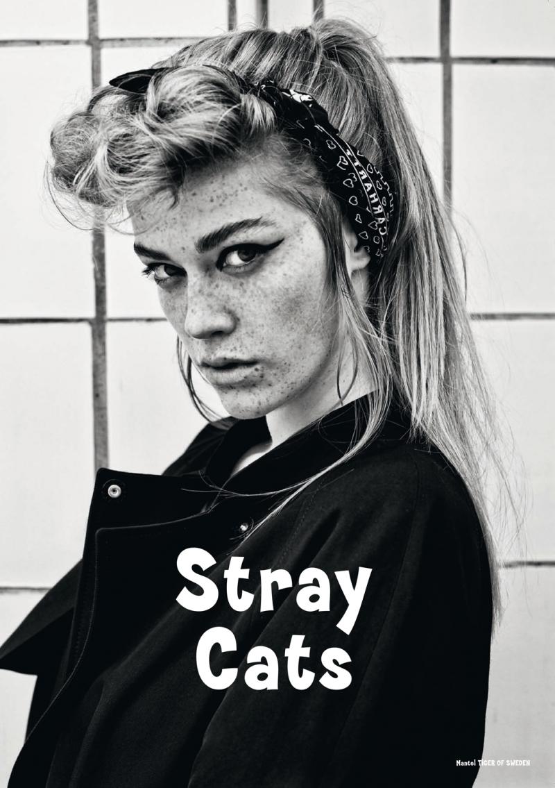 Stray Cats_Shooting_JNC_3-13_2-2